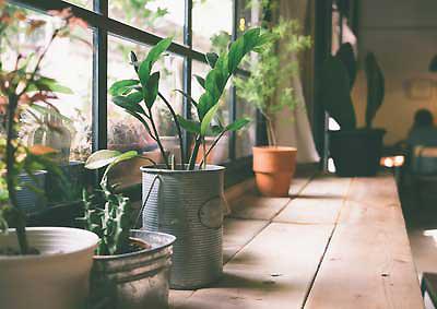 Peut-on choisir n'importe quelle plante pour les bureaux professionnels ?