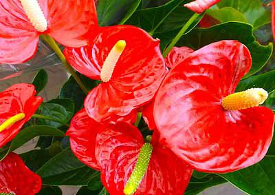 Choisir des plantes de bureau qui demandent peu d'entretien