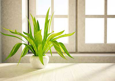 L'entretien des plantes dans vos locaux professionnels